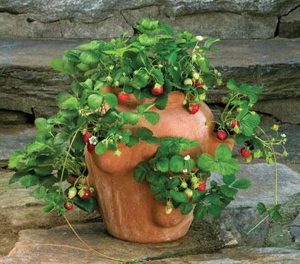 strawberry-jar