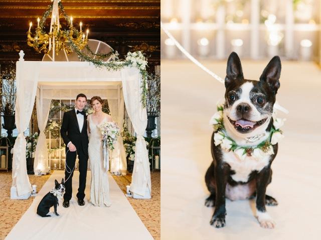 pre-wedding dog portrait by Heather Waraksa
