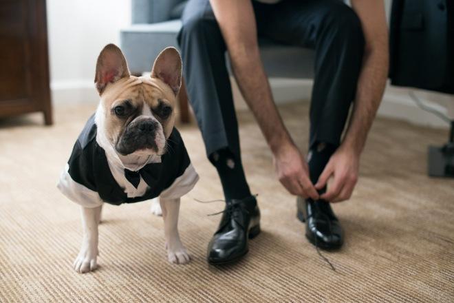 dog in tuxedo